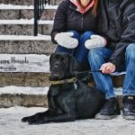 Black lab outdoor winter pet portraits