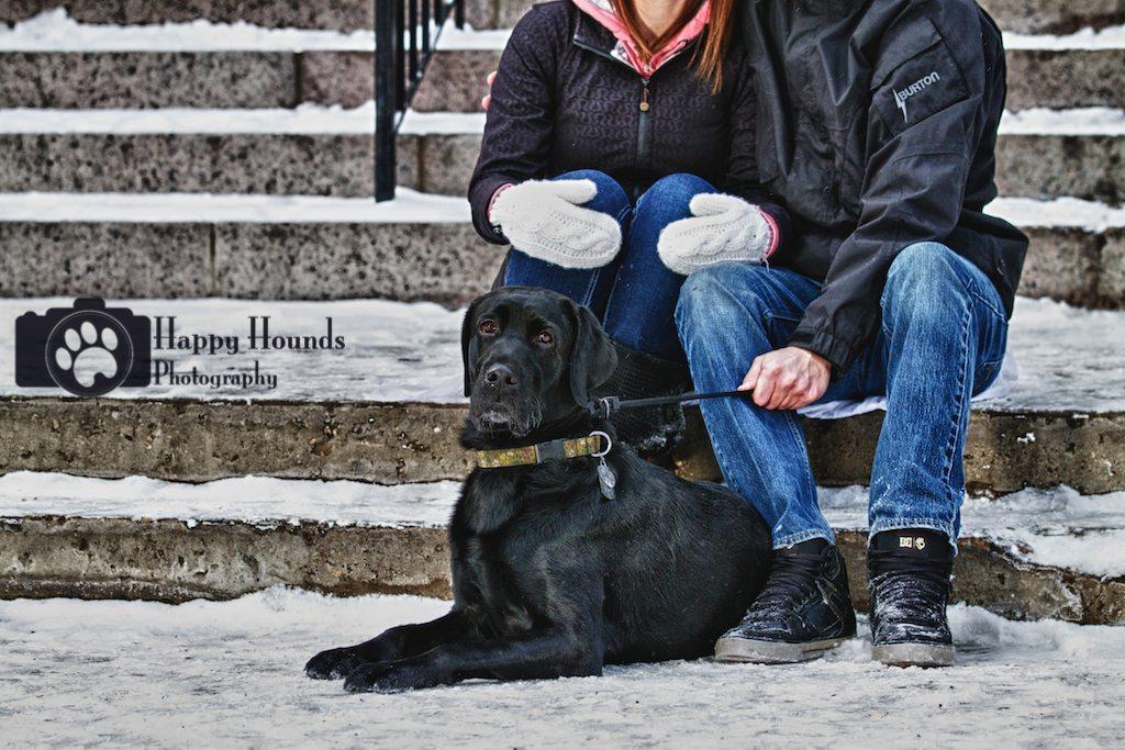 Black lab outdoor winter pet portraits