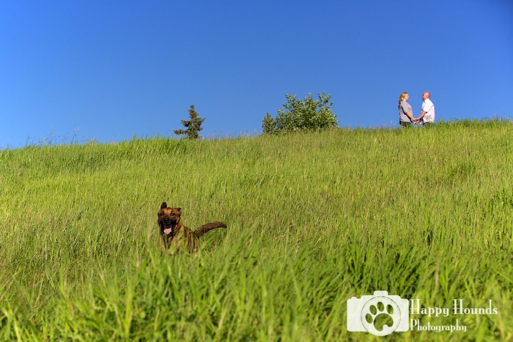 Dog Running Through Green Grass